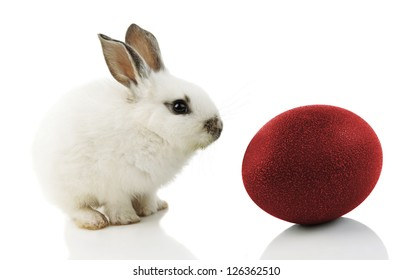 White Easter Bunny with red egg on white background