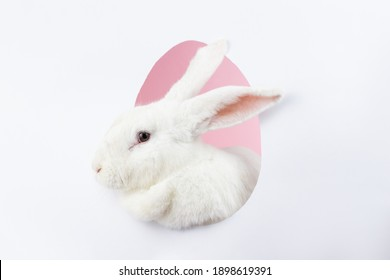 white Easter cute fluffy bunny peeks out of the silhouette of an egg on a pastel pink background. Easter bunny for the religious holiday of spring Easter. Greeting card, close-up, Minimalism - Shutterstock ID 1898619391