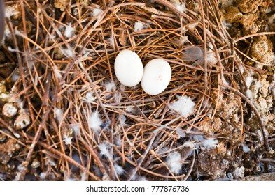 white egg's bird in bird nest with feather and excrement all around