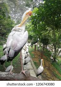 White egret in bird park