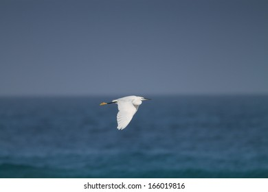 A White Egret Flying over Blue Sea