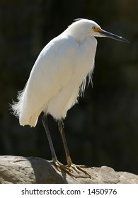 A white egret in the sunlight