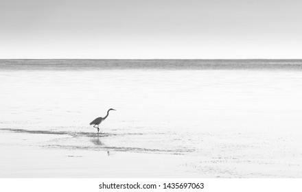 White egret in tranquil coastal waters in stunning black and white