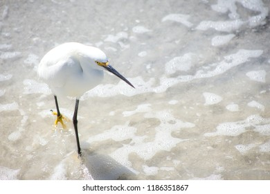 White Egret with yellow feet and beak walking through the waves at the beach.