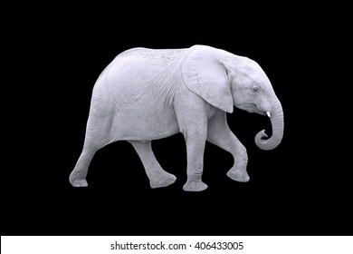 White Elephant Isolated on Black Background