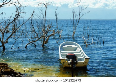 white empty motor boat on salt lake, the trunks of the trees without leaves in the water, Lake Enriquillo, Dominican Republic