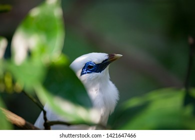 White exotic bird sitting on a branch