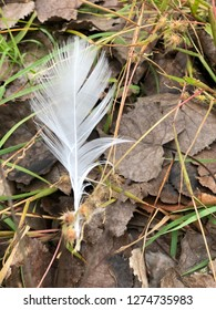 White feather amidst the leaves.