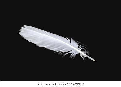 The white feather of a bird isolated on the black