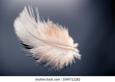 White feather from a dove closeup