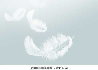 White feather floating in the sky