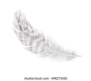 white feather isolated on white background
