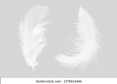 white feather isolated on gray background.