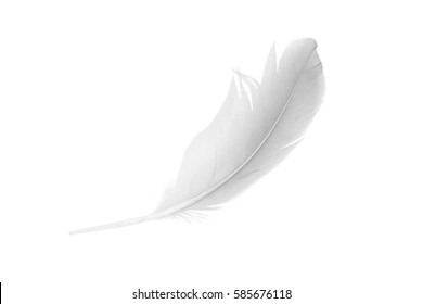 white feather on white  background