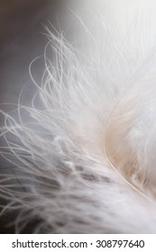 White feather on the black background.