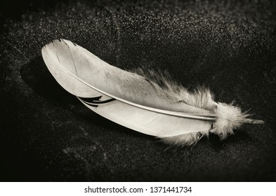 White Feather on Black Slate. Black and White.