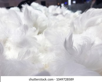 White feather pile