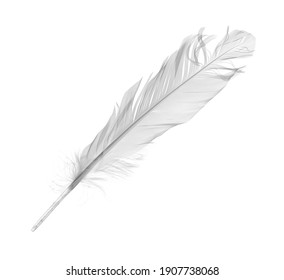 White feather, quill isolated on white background with clipping path