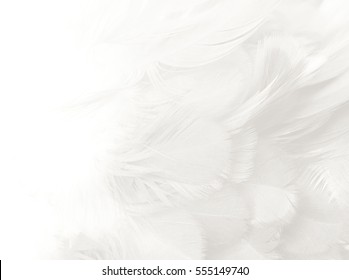 White feather texture background,free space for add text or baby products and other