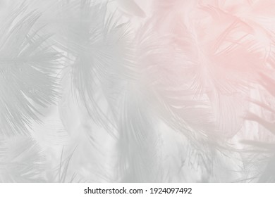 white feather wooly pattern texture background
