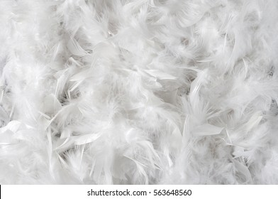 white feathers background