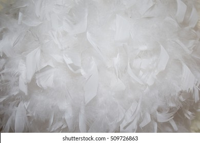 White feathers background soft concept of background