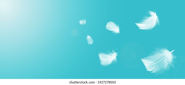 White feathers floating in the sky with sunlight. free space .