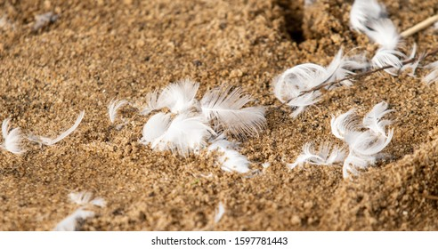 White feathers fluff on the sand. Summer beach landscape, bird feather fluff.