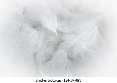 White feathers texture background
