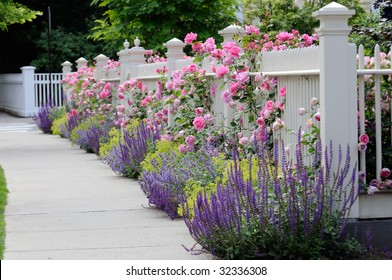 White fence with flowers. Pink roses, blue sage, purple catmint, green and yellow lady's mantel