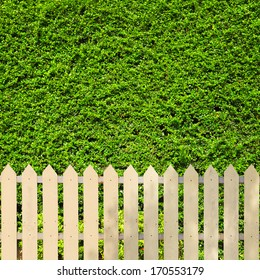 White fences with green leaves background