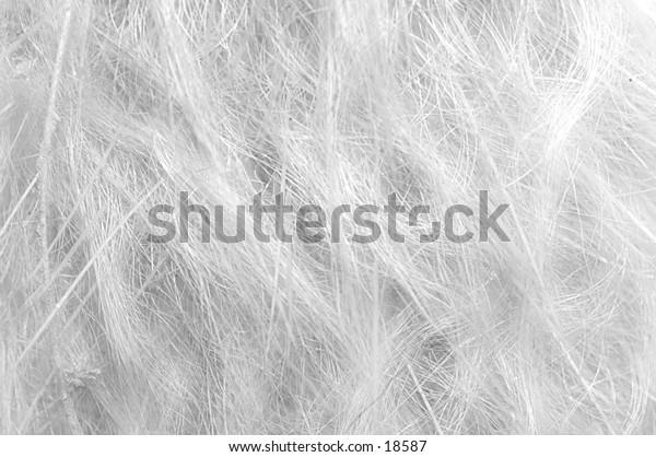 White fibers and hair