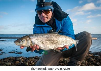 White fish fishing on Swedish coast