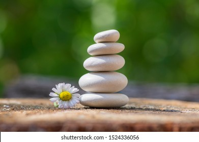 White five stones cairn in daylight, poise light pebbles on wooden stump in front of green natural background, zen like sculpture, simplicity, harmony and balance, flowering daisy flower