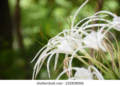 White flawer and green background.