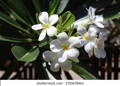 white flora set of flowers