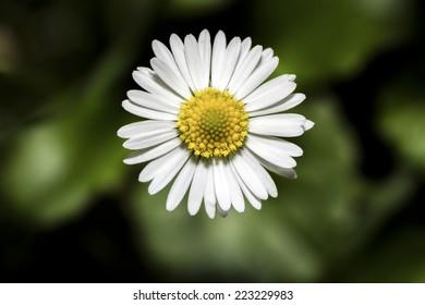 White flower - Shutterstock ID 223229983