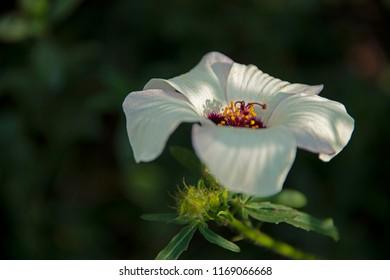 white flower against a dark background