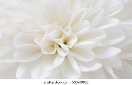 White Flowers Background Images Stock Photos Amp Vectors
