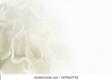 White Flower Background, Sympathy Card, Wedding Background, White Carnation Macro Closeup