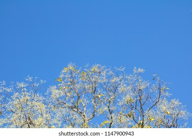 White flower and branches of tree against the blue sky.