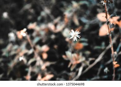 White Flower By Ashish