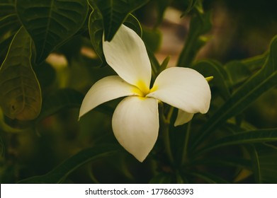 White flower with center yellow