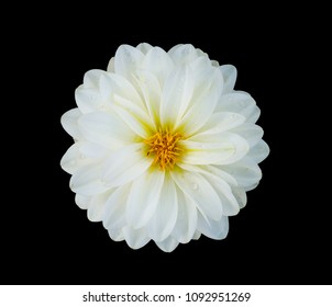 White flower close up