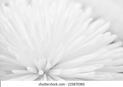 White flower close-up wedding abstract background.