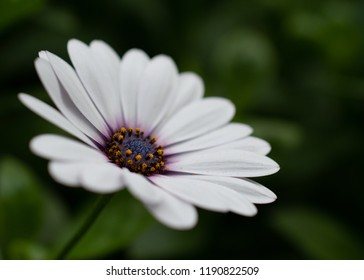 White flower yellow center images stock photos vectors shutterstock white flower daisy with purple and yellow center blur background mightylinksfo