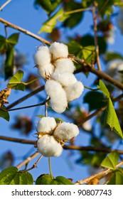 White flower of Ebony's tree