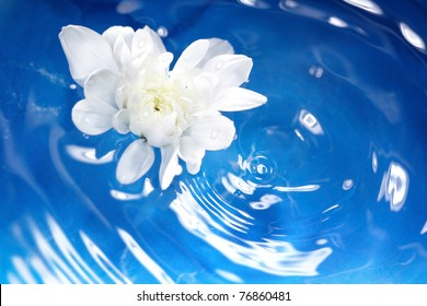 White flower flowing on a blur water. Shallow depth of field added by macro lens for natural view.