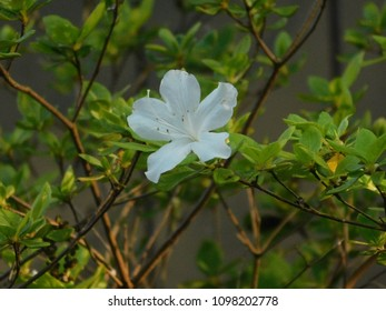Dogwood flower isolated images stock photos vectors shutterstock white flower four petals mightylinksfo