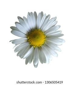 white flower garden design